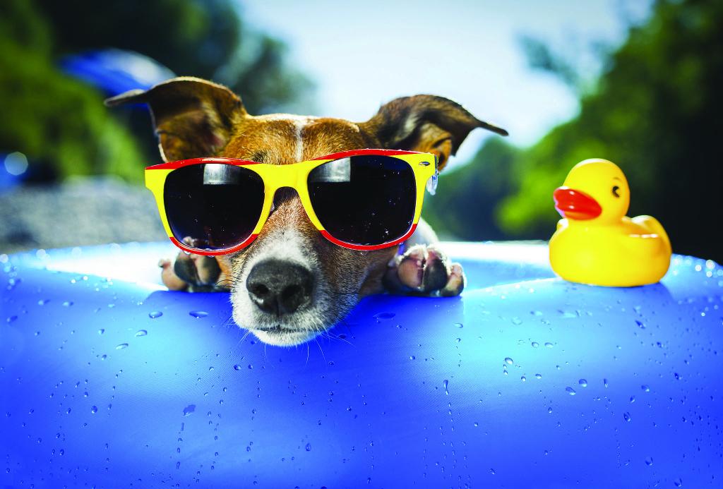 636053518388857607658741905_dogs-summer