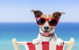 Summer Safety for Pets     by Dr. Jodi Reed, DVM