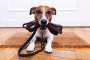 Benefits of Walking Your Dog and Why Fido Needs One.  By Harmony Animal Hospital