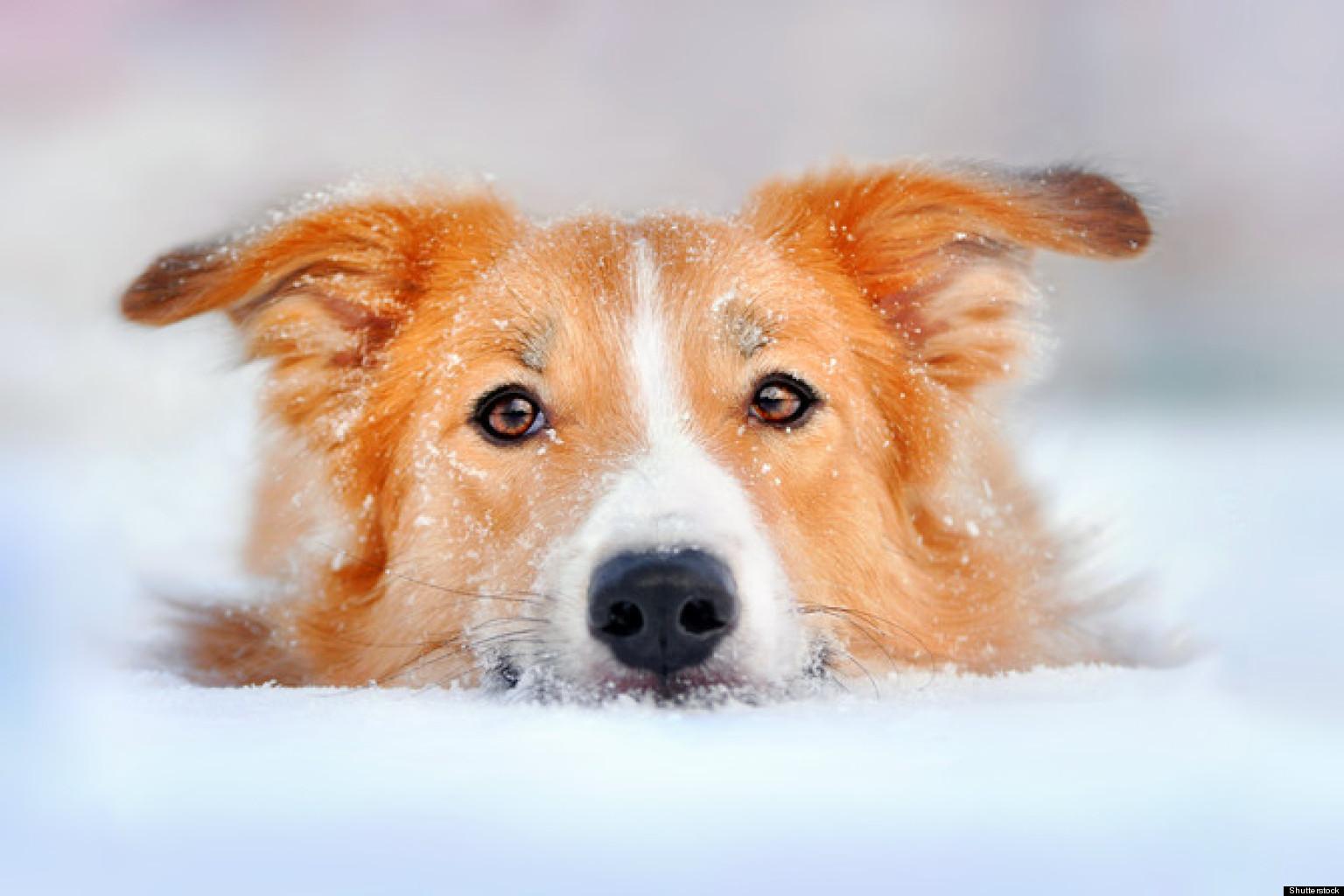 Pet Travel Tips: Preparing Felix & Fido     By Dr. Jodi Reed